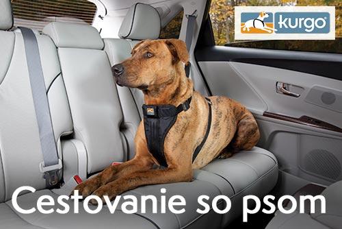 Cestování se psem - autem, vlakem či autobusem